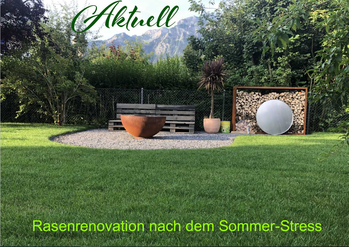Rasenrenovation nach dem Sommer